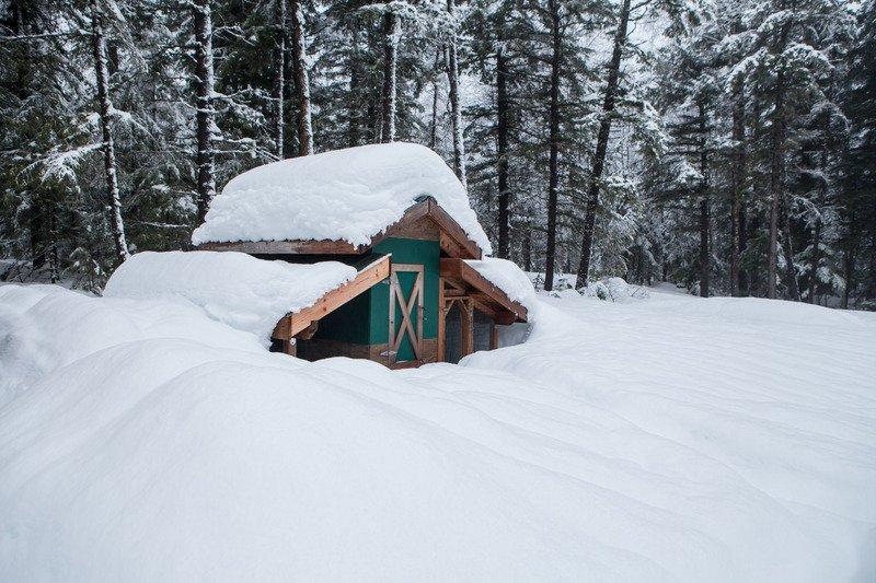winter chicken coop design