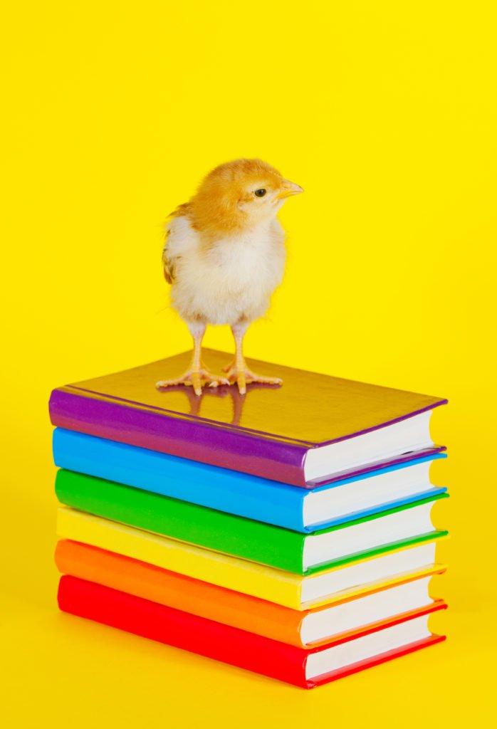 the 20 Best Chicken books