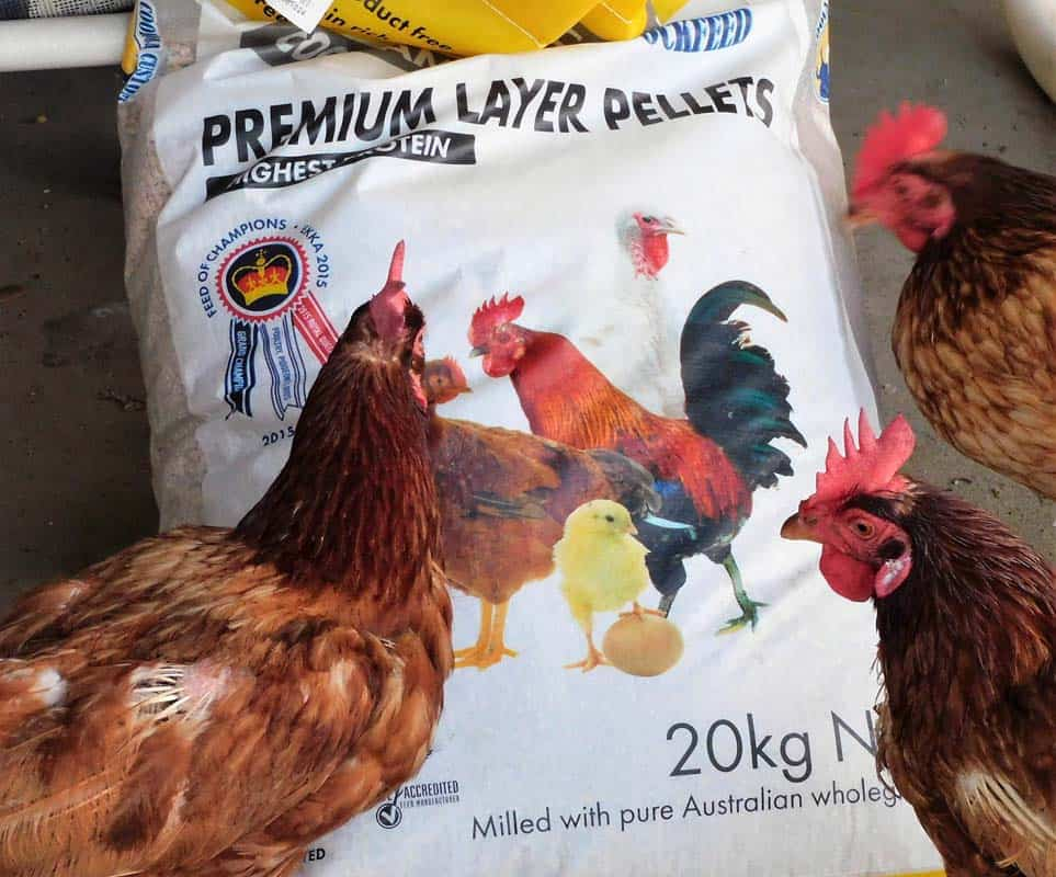 how-much-will-my-chickens-eat
